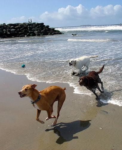 The Get Leashed Guide To America S Most Dog Friendly Beaches