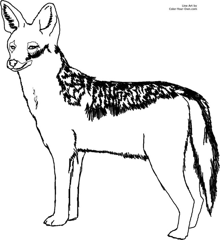 Coyote (Jackal) Coloring Pages For Kids   Preschool And Kindergarten