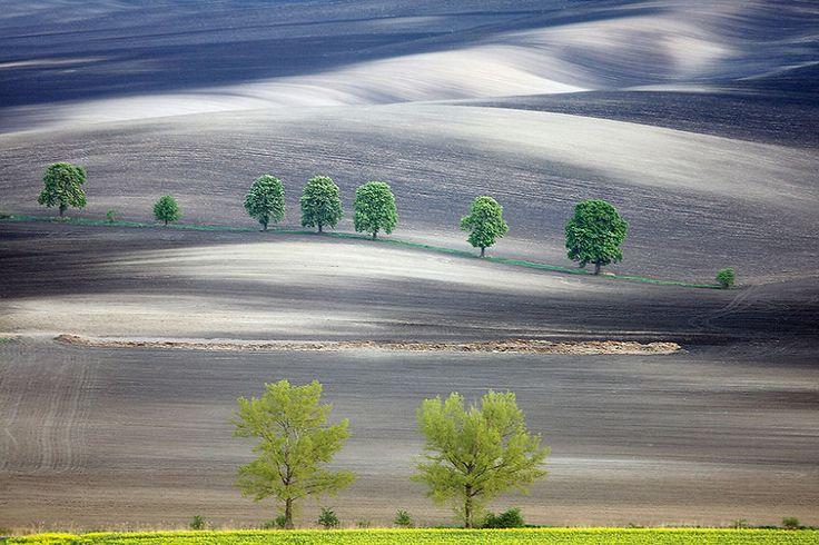 La beauté hypnotisante des champs de Moravie  2Tout2Rien