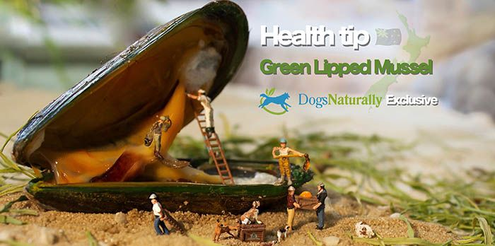 Green Lipped Mussel for Dog ---  A. NEEDS 1050MG!!!!!  ---- 15mg of powdered extract per 1 pound of pet's body weight. --- GLM is especially effective when taken in conjunction with glucosamine, chondroitin and fish oil, forming a quadfecta of awesomeness :)