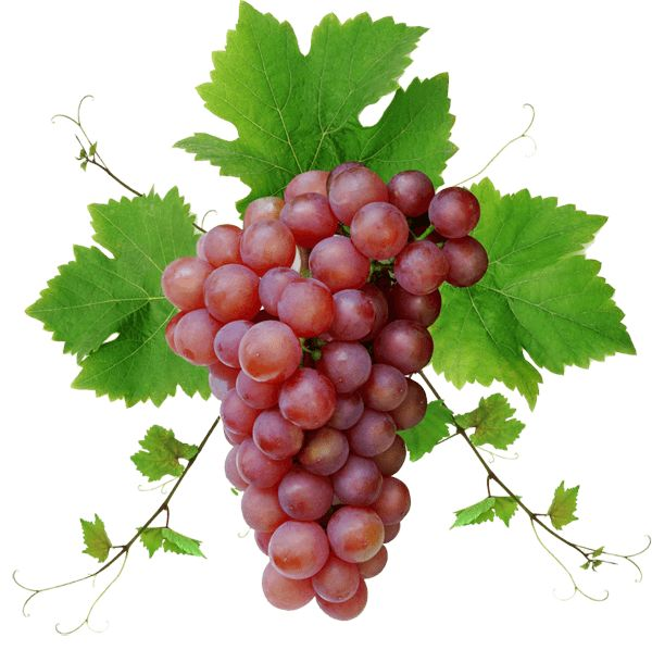 Grape Png Image Download Picture Png Image Grapes Fruit Red Grapes