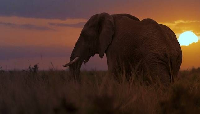 Elephants are worth 76 times more alive than dead Even in the midst of an international poaching boom, ivory from dead elephants can't compete with the value of seeing these impressive animals alive and in their element, according to a new report...