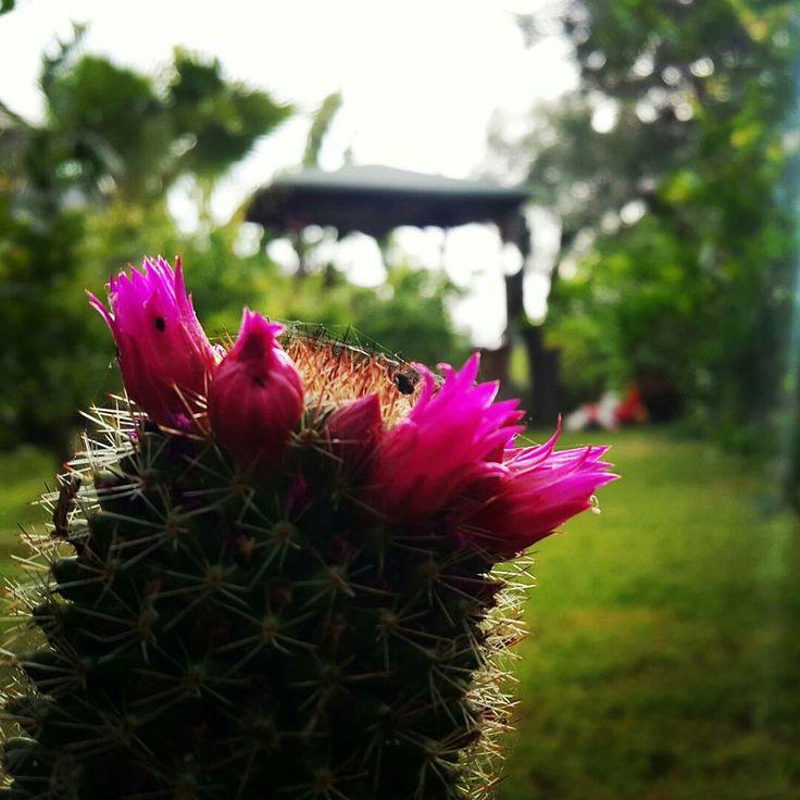 Mayıs ayının, Güzelliklerle, sevgiyle, sağlıkla, Huzurla, bereketle, iyiliklerle gelmesi dileğiyle.. Günaydınlar... ...dikenlerin içinden bu muhteşem çiçekleri açtıran rabbim bizler için ne güzellikler hazırlamıştır kim bilir ...kim bilir ...  #adrasan #kaktusdunyasi #engüzelbahçe #huzur #doğa #mavi #yeşil #aşk #nature #fotoğraflar #antalya  Www.adrasandenizhotel.com  @ Adrasan Deniz Otel