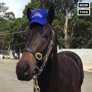Horsey McHorseface is your new favorite internet meme #news #alternativenews