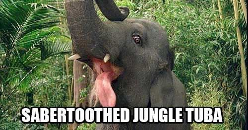 If Stoners Named Animals Things Would Be Hilarious