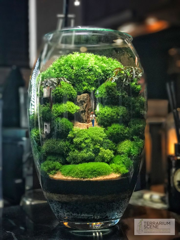 613 besten terrarium scene bilder auf pinterest. Black Bedroom Furniture Sets. Home Design Ideas