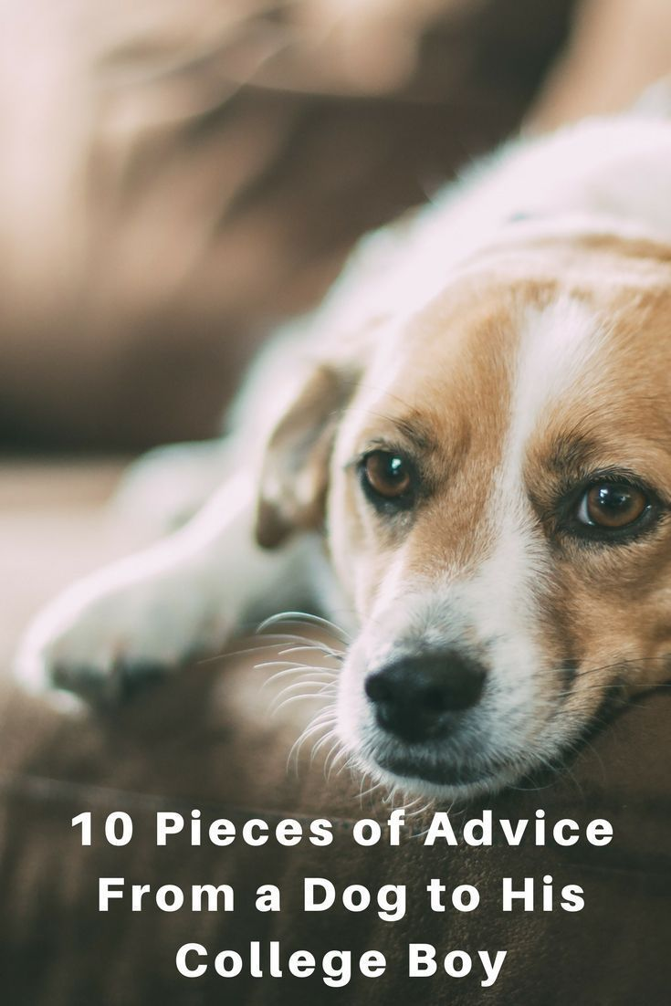 10 Pieces of Advice From a Dog to His College Boy
