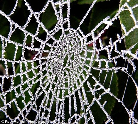A cobweb has a bejeweled look, due to the frosty temperatures in Peterborough, Cambridgeshire