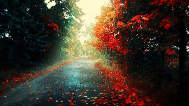 Rain Nature Wallpapers