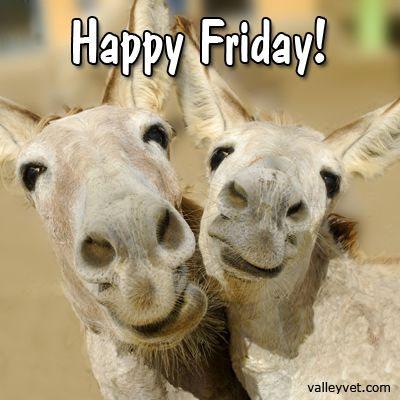 happy friday horse sayings pinterest donkeys animals and happy. Black Bedroom Furniture Sets. Home Design Ideas