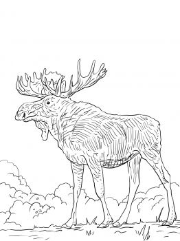 Moose coloring page PRESCHOOL Brown Pinterest
