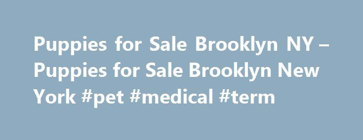 Puppies for Sale Brooklyn NY – Puppies for Sale Brooklyn New York #pet #medical #term http://pet.remmont.com/puppies-for-sale-brooklyn-ny-puppies-for-sale-brooklyn-new-york-pet-medical-term/  We are here to answer your questions about any of our adorable puppies and Puppies for Sale in Brooklyn, NY. Grooming or Boarding questions our staff would be pleased to help you. Puppy Paradise: Quality dog breeders dedicated to providing quality beautiful puppies to families. We have a large selection…
