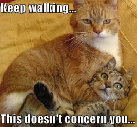 hahahahaFunny Cat, Too Funny, Funny Stuff, Crazy Cat, Keep Walks, Funny Animal, So Funny, Cat Memes, Cat Lady