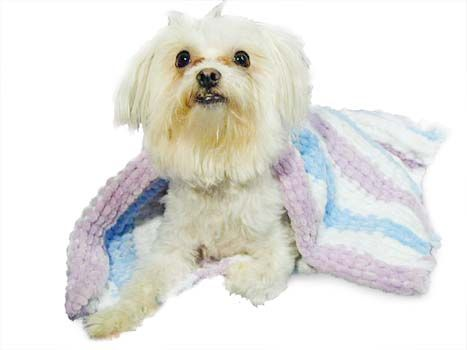 Super Plush Pet Afghan