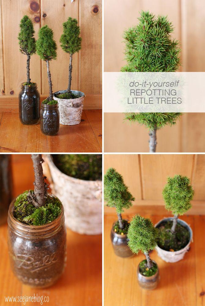 DIY repotting little trees, via seejaneblog