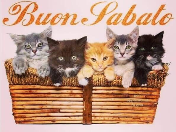 Buon Sabato Gatti Adorabili Gattini Gatti Carini E Gatti