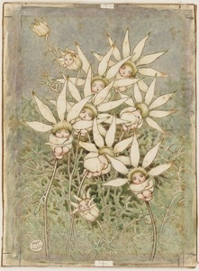 Flannel flower babies, watercolour drawing by May Gibbs. From the collections of the Mitchell Library, State Library of New South Wales http://www.sl.nsw.gov.au/discover_collections/society_art/gibbs/index.html
