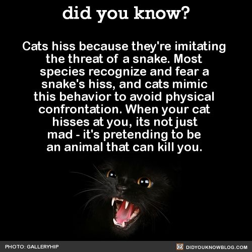 did you know? - Cats hiss because they're imitating the threat of...