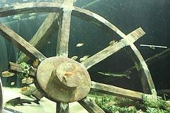 Amazon River exhibit at SEA LIFE Minnesota Aquarium