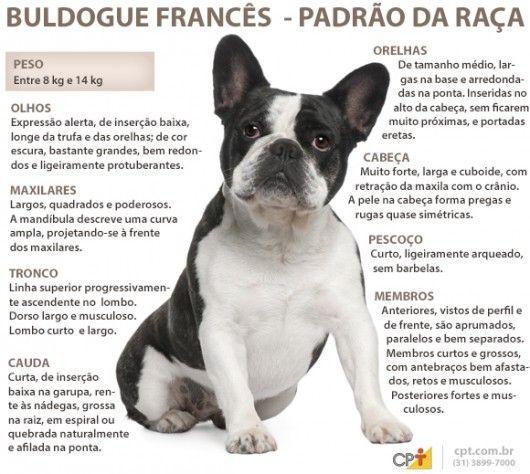 Padrão da raça Buldogue Francês