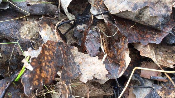 Vad kan man hitta under löven på våren? NATURSPANARNA