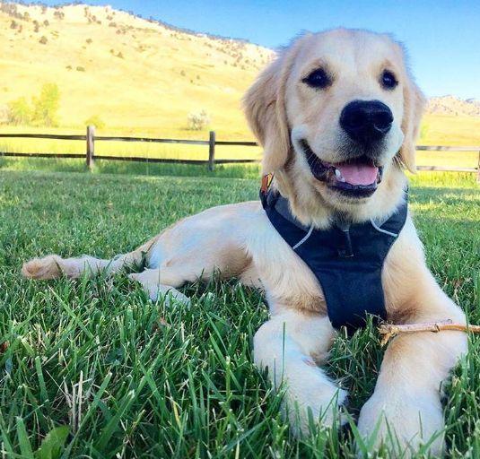 Family time and on sundays we play! #fitdog #fitfamily #sundayfunday #walkingwithdog  #goldenretrieverpuppy #hikingwithdogs  #hikingdog