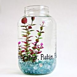 A one gallon PICKLE JAR makes a great home for a betta fish. Add vinyl lettering to make it extra special.Pickle Jars, Ideas, Pickles Jars, Beta Fishpickl, Flower Tower, Jars Fish, Mason Jars, Fish Bowls, Bowls Aquariums