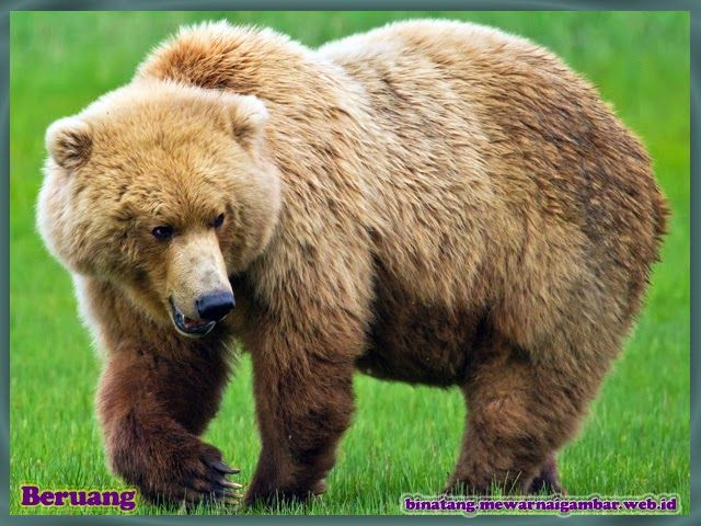 17 Terbaik ide tentang Beruang Grizzly di Pinterest ...
