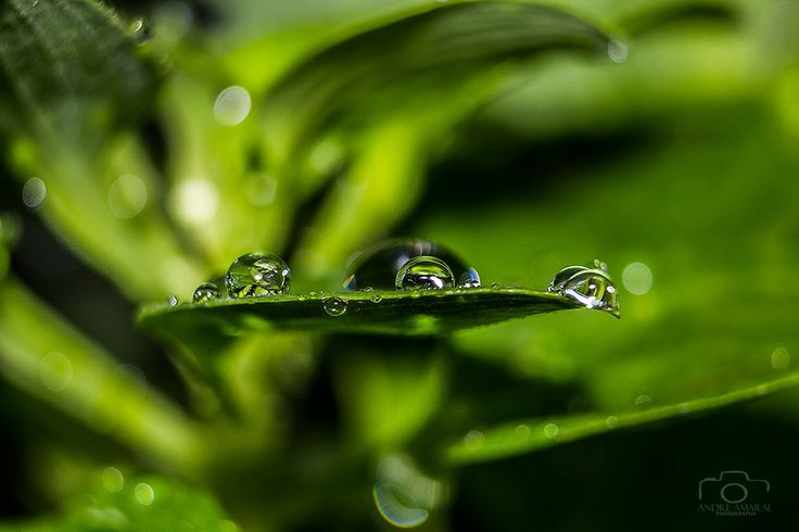 Drops by Andre  Amaral on 500px