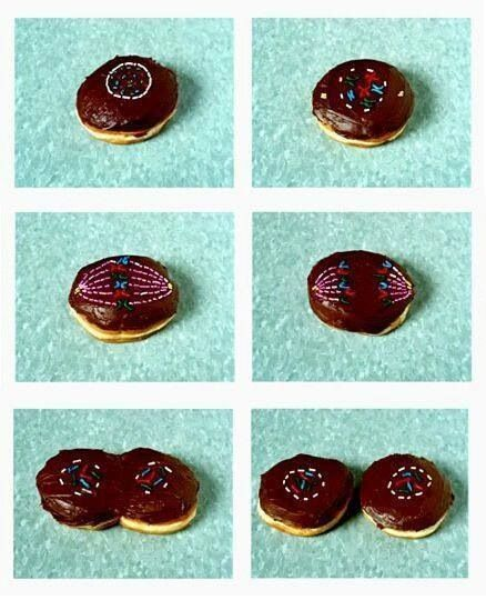 Teaching Mitosis with Donuts,what a good way to change things up in the classroom,instead of constantly taking notes!