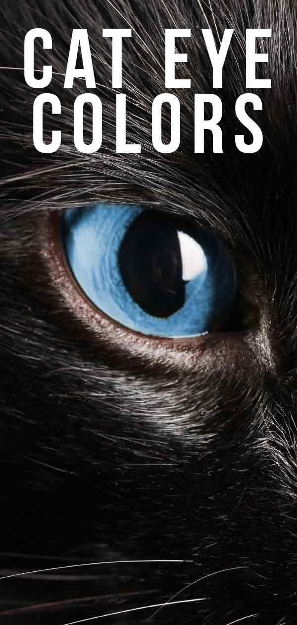 Cat Eye Colors An Amazing Range Of Shades Cat Eye Colors Cat Colors Black Cat Aesthetic