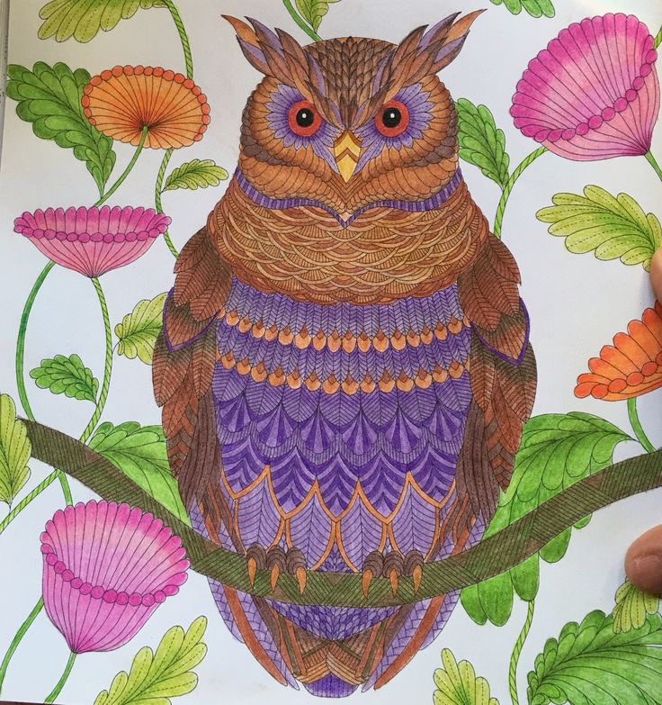 501 Best Tropical World Coloring Ideas Images On Pinterest