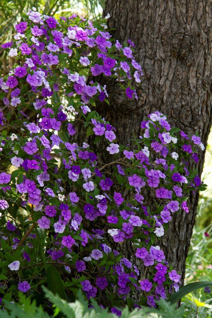 schattenpflanzen brunfelsia pauciflora