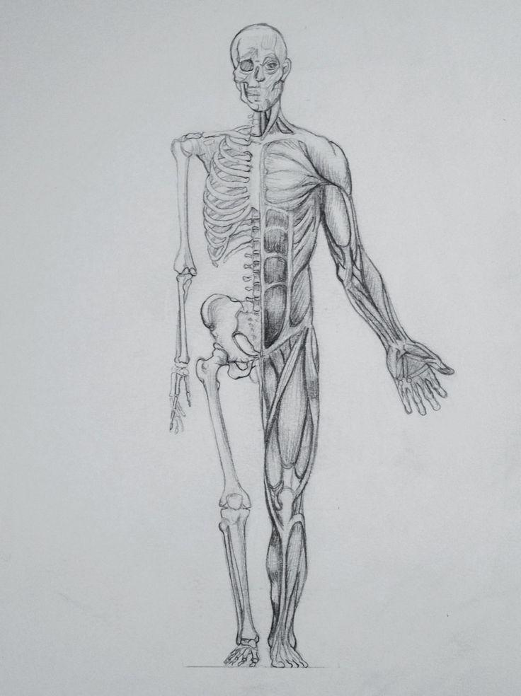 рисуем анатомия человека в картинках продаже загородных