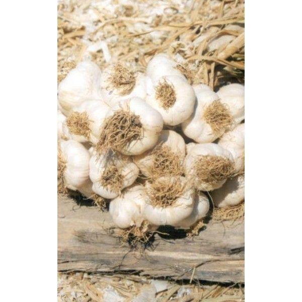 1 Kg. Sarımsak Toz Ekstresi,Allium Sativum,Garlic Extract - Doğal Tedavi - İbrahim Gökçek - Alternatif Tıp - Bitkisel Ürünler - İksir - Alovera - Bitkisel Sağlık Ürünleri - Şifalı Bitkiler - Bitkisel Setler - Bitkisel İlaçlar - Herbalist İlaç Değil Bitkisel Gıda Takviyesidir. www.alternatiftip.com.tr