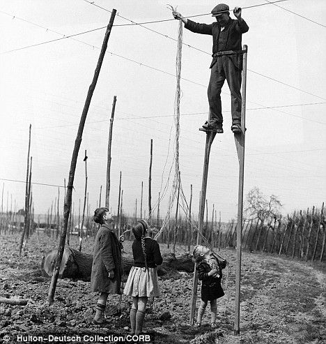 We love that stilts are no longer required to string hops!