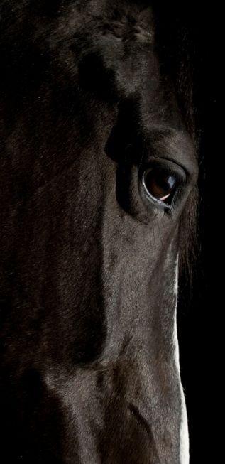 .Beautiful Horses, Hors Eye, Painting Hors, Horse Love, Black Horses, Black Beautiful, Hors Pics, Beautiful Creatures, Animal