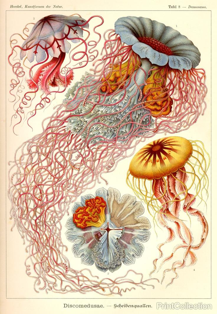 Jellyfish - science illustration