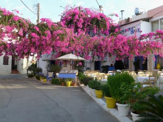 Taverna Odas, Malia, Crete, Greece  (my Favorite in Malia)