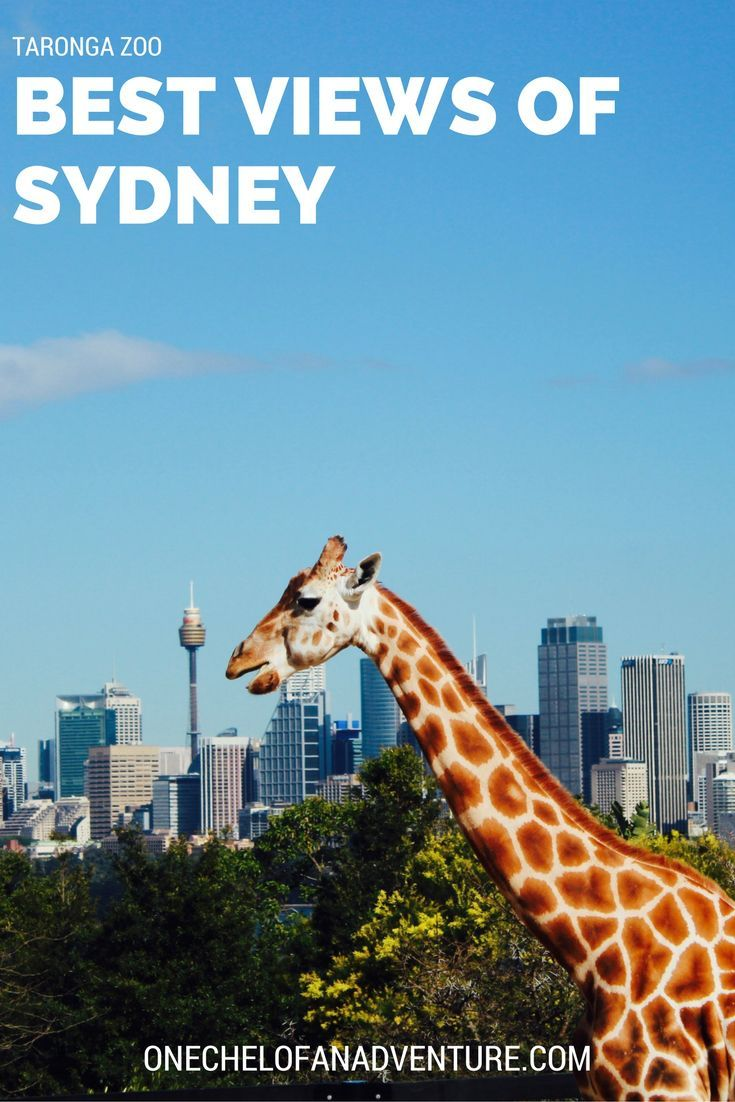 The Sydney Taronga Zoo The Zoo With The Best View Oceania Destinations Oceania Travel Australia Travel