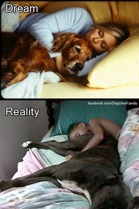 Dog sleeping in bed reality - photo#31