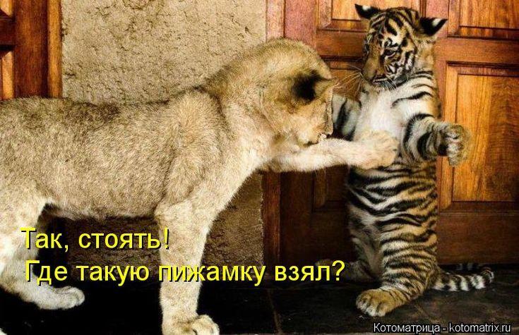 Бумаги открытка, смешные картинки со словами животные