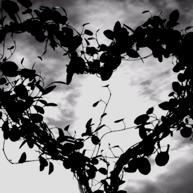 : Shape Trees, White Flowers, Heart Branches, Natural Beautiful, Black And White, Heart Shape, Flowers Heart, Natural Heart, Pretty Pictures