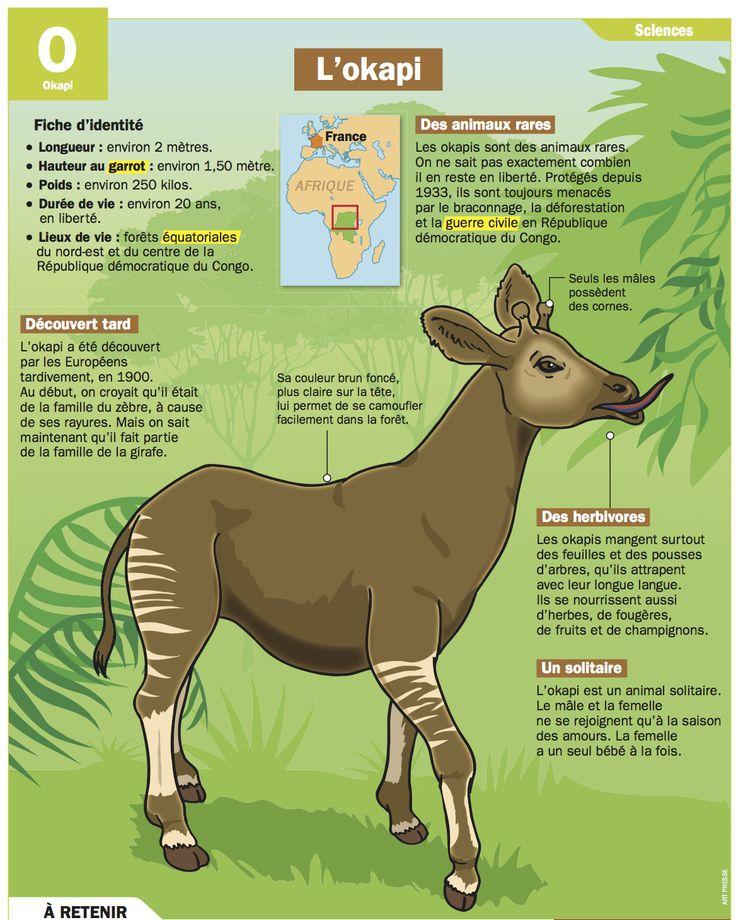 Fiche exposés : L'okapi