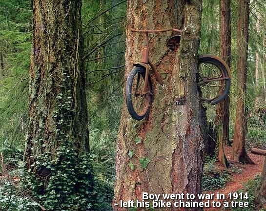 THIS POPULAR URBAN LEGEND: Vashon Island (Near Seattle, Washington)  The Bike Tree - In 1914 a boy went to war and left his bike chained to a tree. - Nearly 100 years later, this is the outcome.