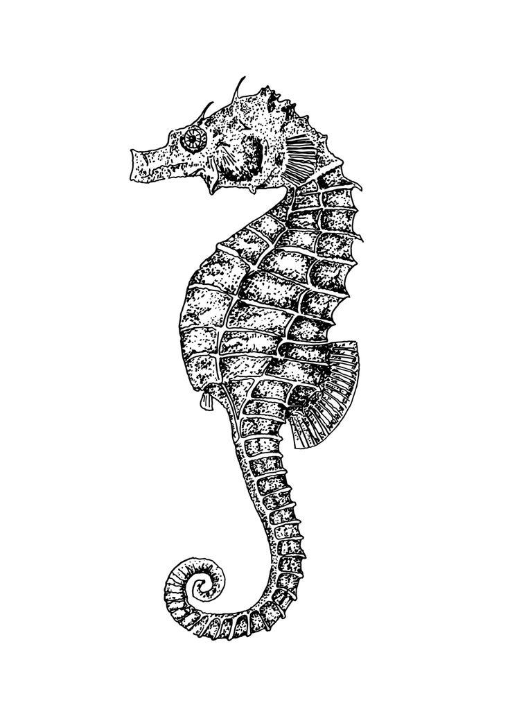 Die besten 25+ Seepferdchen Zeichnung Ideen auf Pinterest ...