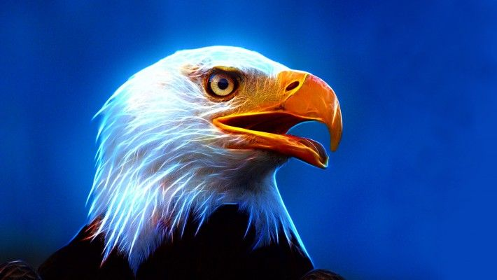Eagle Ultra Hd Wallpaper For Mobile Phone And Pc Wallpapers For Mobile Phones Hd Wallpapers For Mobile Mobile Wallpaper