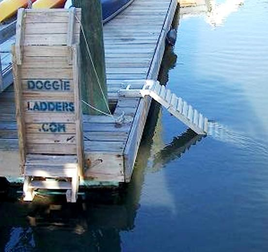 17 Best images about Dog Dock Ladder on Pinterest | Cars, Swim and Boats