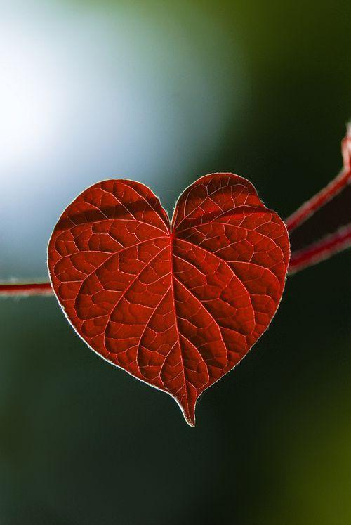 ...herz der natürlichen liebe..