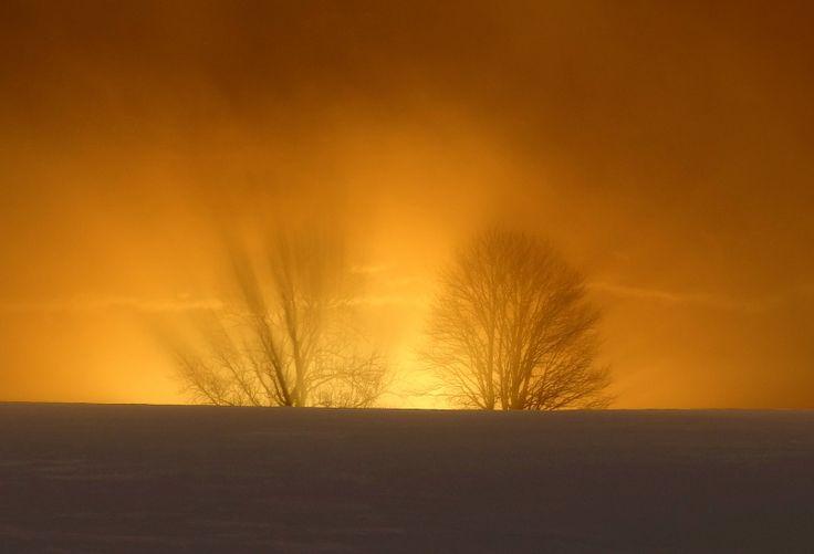 Deux arbres semblent en feu au lever du soleil. Bullet, fév 2014.